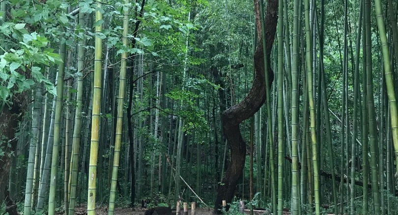 East Palisades Bamboo Forest
