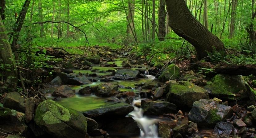 Cascade Nature Preserve